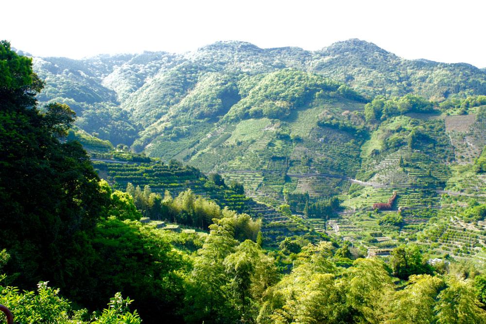 人と自然にやさしいエシカルなあこやパール(真珠)が育つ山にはみかん畑(無農薬)