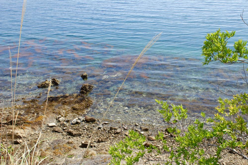 養殖場の透き通った海